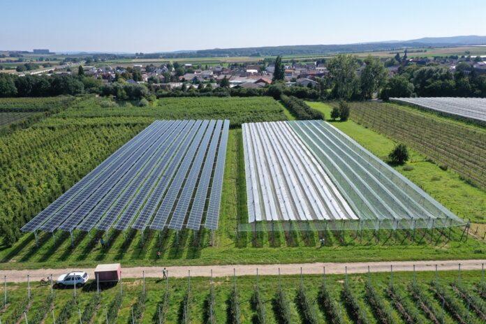 """""""W ramach projektu """"Agri-PV Obstbau"""" testowane są różne technologie modułów słonecznych (po lewej) i konwencjonalne systemy ochrony roślin (po prawej)."""""""